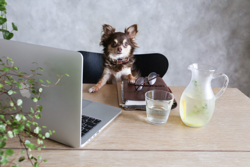 退職代行サービスの良し悪しを比較検討する犬
