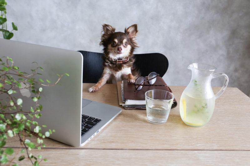 退職代行のメリット・デメリットを比較する犬